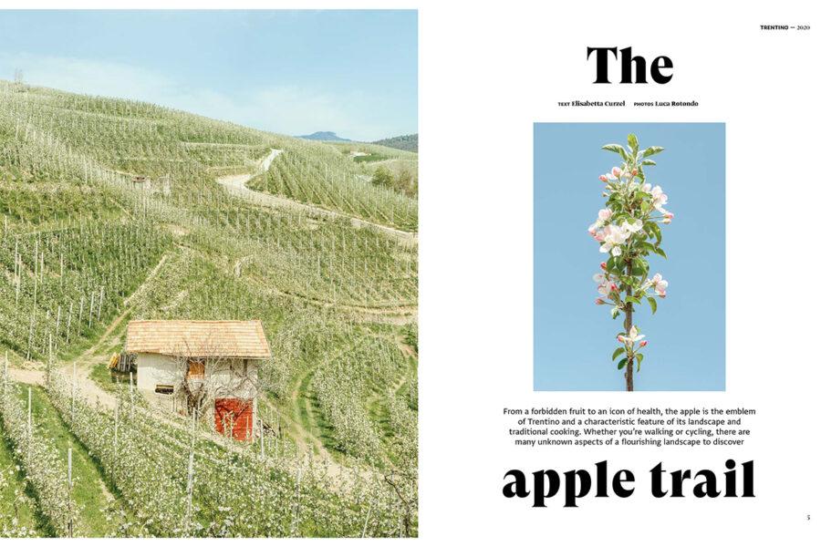 Luca Rotondo_fotografo_trentino_italy_apple_flower